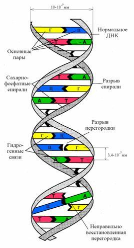 2.1. Молекулярный уровень воздействия